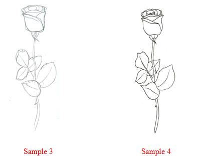 Picture Rose Flower on How To Draw   How To Draw A Rose
