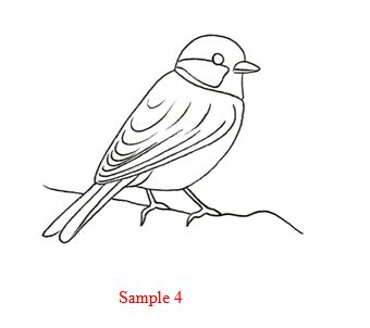 How to draw how to draw a bird