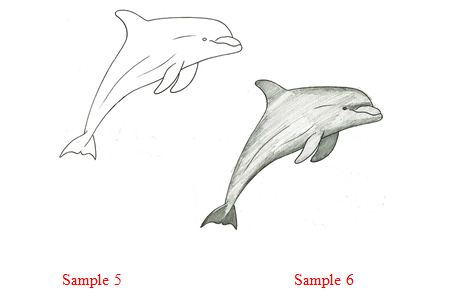 Dolphin In Water Drawing