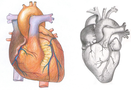 Learn to draw a real heart
